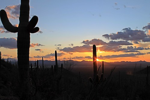 park sunset arizona cactus orange southwest nature colors cacti outside outdoors desert tucson hiking az hike national saguaro