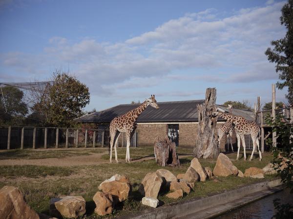London zoo-5