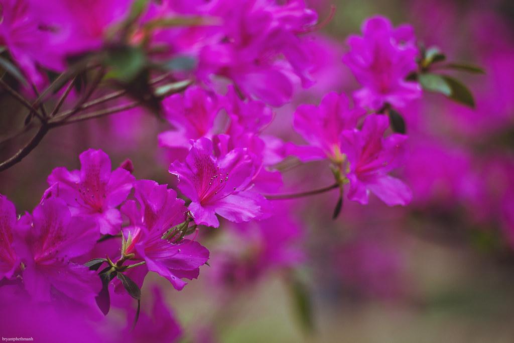 IMAGE: http://farm8.staticflickr.com/7190/6794074292_7befb60776_b.jpg
