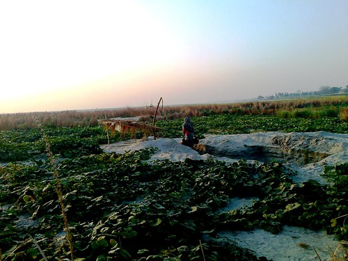 Ganges Farming