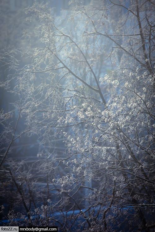 03_trees-[20120203_9702]