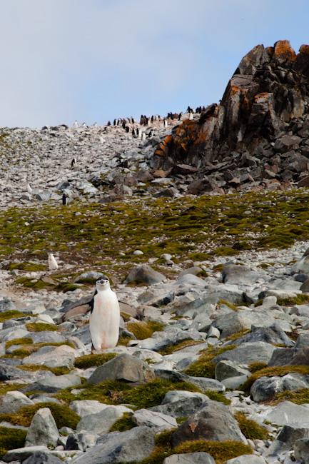antarctica-blog-12