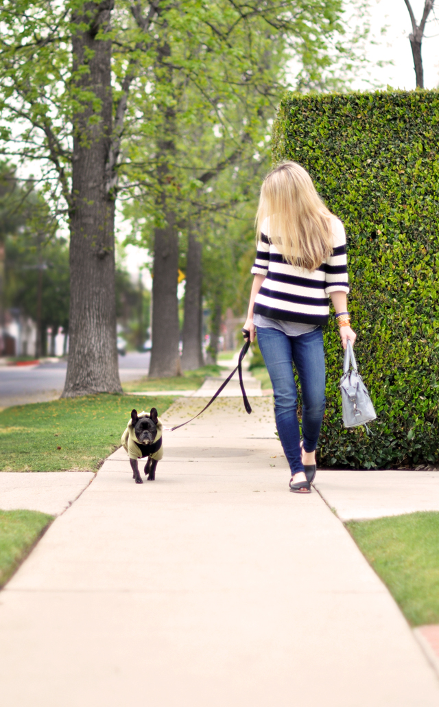 walking the dog-frenchie-black french bulldog-outfit