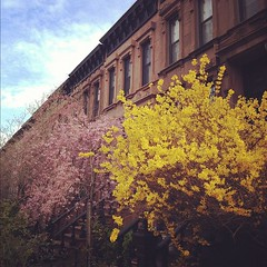 Brooklyn in bloom