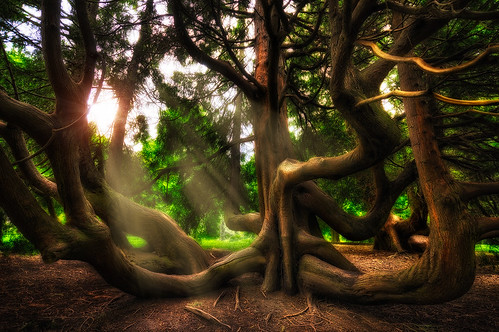 seattle park trees usa sun beautiful lines washington woods flora nikon warm branches curves sigma explore lotr fantasy bark ethereal mysterious pacificnorthwest mystical rays unusual limbs volunteerpark 1020mm washingtonstate magical 1020 pnw sunbeam emeraldcity hdr tolkien middleearth sinuous 2011 d90 lothlorien explored sigma1020mmf456exdc nikond90 tronam gabrieltompkins