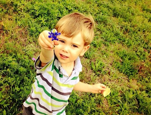 Jude and the Bluebonnet