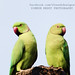 love :) by Dinesh Designs & Photography