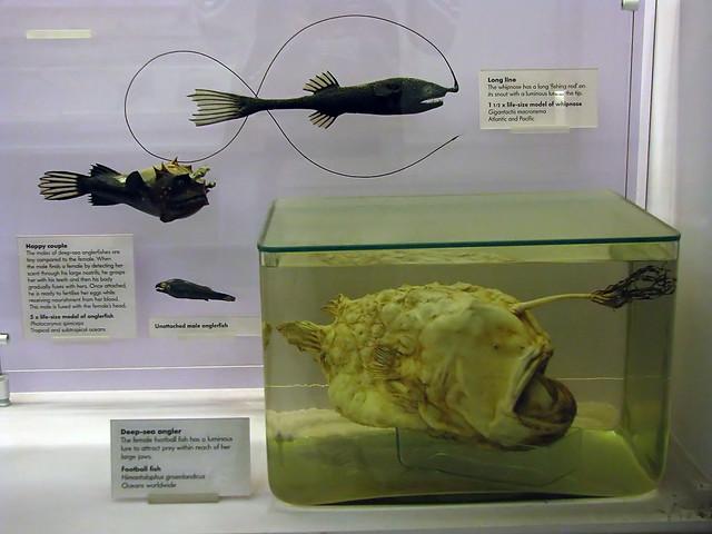 London - Natural History Museum: Tiefseefische II