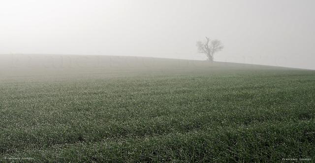 soledad junto al rocio