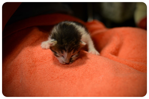 Кузьма и ее дети: слепые котейки