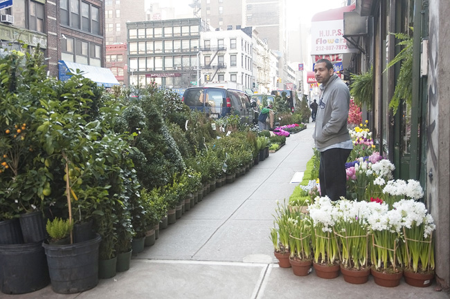 New York Portraits: An Early Spring, In The Flower District