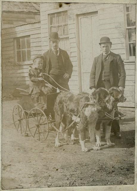 Old Dog Carts Uk
