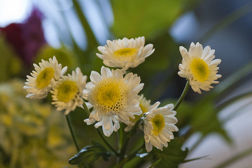 Little daisies maybe