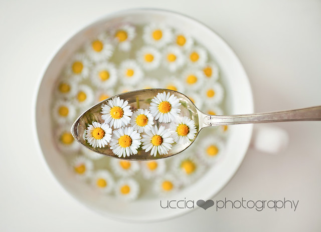 Lunch of spring - Creative Still Life Photography