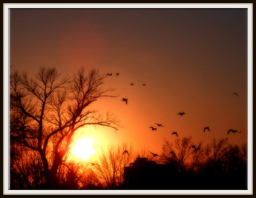 ~No bird soars too high if he soars with his own wings ~ by Purpletree..(Nancy Lee)