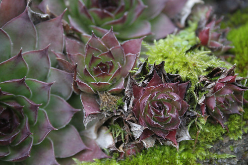 succulents and moss
