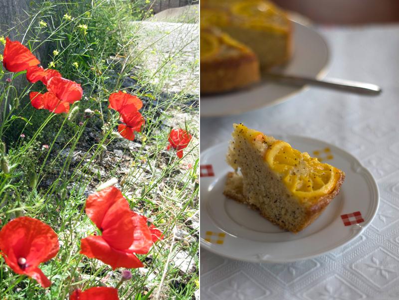 Bolo de laranja e sementes de papoila // Orange Poppy Seed Cake