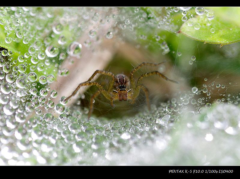 20120304-珠蛛