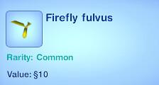 Firefly Fulvus