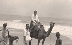 يمتطي الجمل  - كراتشي - 1951