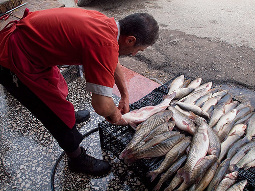 Fish from Tigris