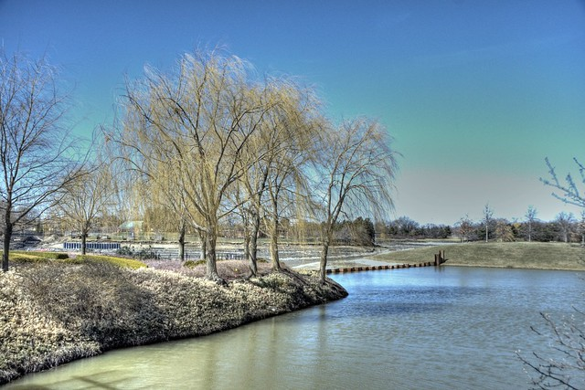 hdr chicago botanic gardens, glencoe, il, weeping willow trees, march 10, 2012 36 4x6 bpx