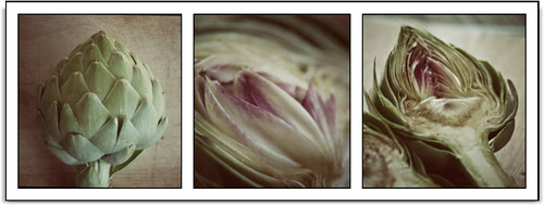 Artichoke strip 1
