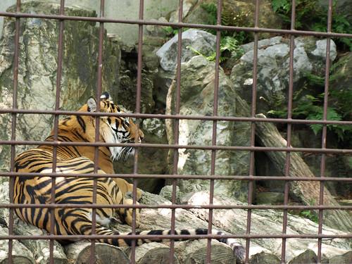 Big cat:-)