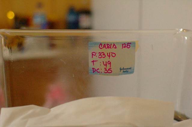 76/366: Carla