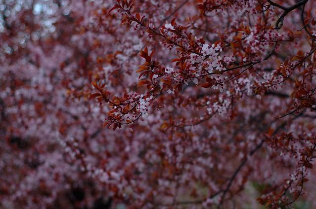 80/366: Primavera