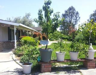 My Whimsical Green Garden Is Flourishing 3