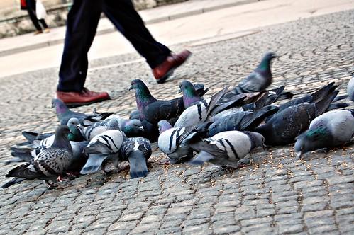 Pidgeons in Marienplatz, Munich