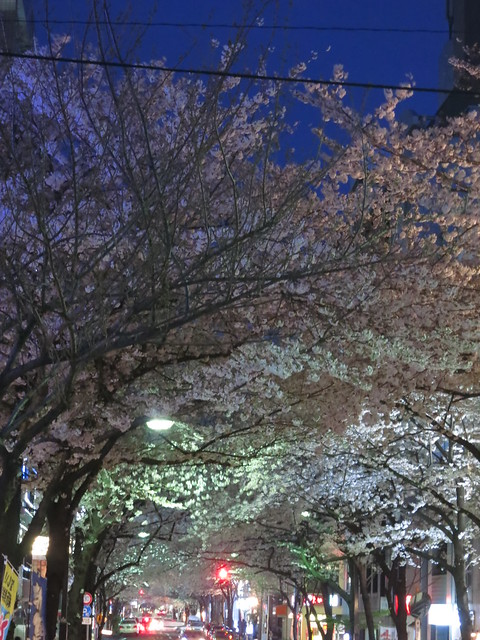 Sakura night street 01