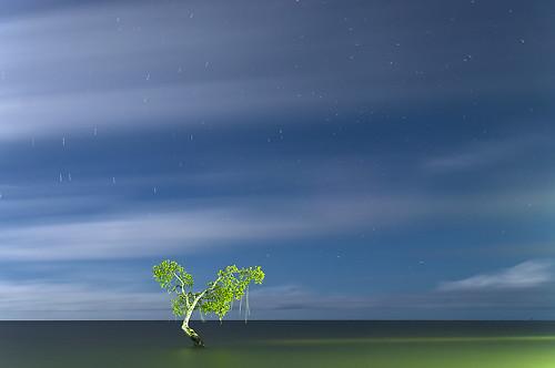 無料写真素材, 自然風景, 樹木, 海, 水平線