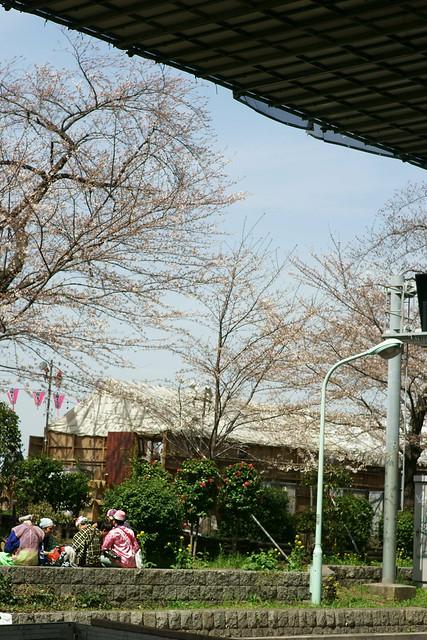 向島春の行楽, Mukohjima Tokyo, Mar 2014. 010