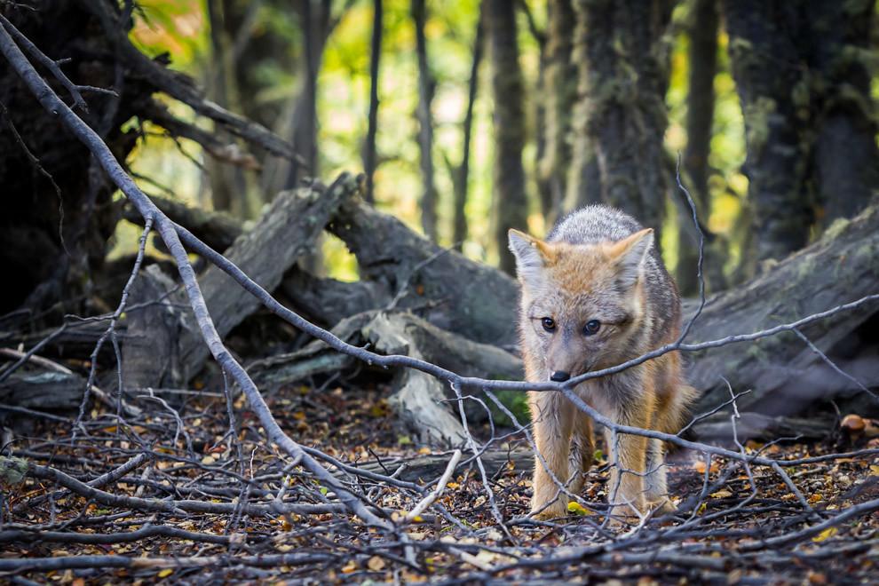 Luego de observar a un pequeño zorro alimentarse, lo seguí lentamente hasta esta parte del bosque en donde se despidió tímidamente. (Tetsu Espósito).