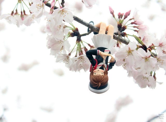 sakura hanging wm