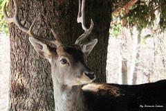1° Bambi re della foresta