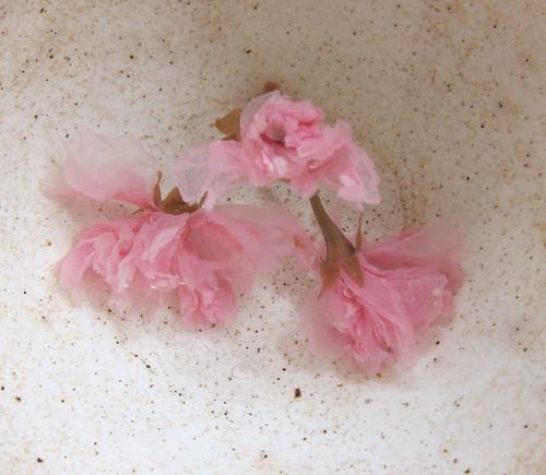 Sakurayu - cherry blossom 'tea'