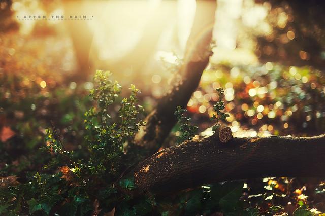 After the rain - Beautiful Bokeh Photography