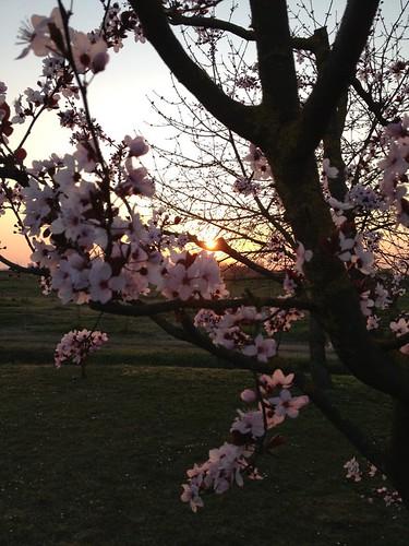 E' la primaveraaaaaa by meteomike
