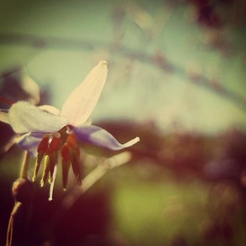 sweet flower by amber lee lee