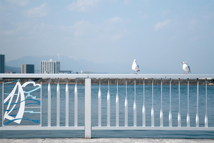 カモメ昼下がり|大津港