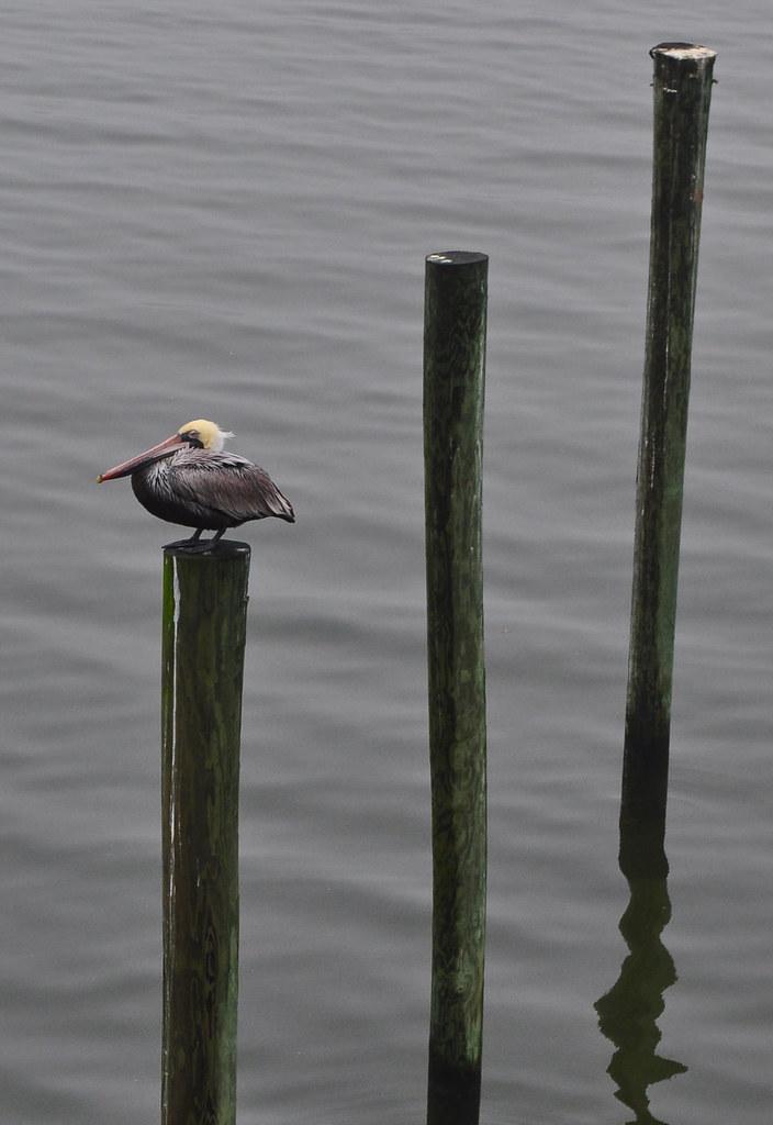 Pelican Posts