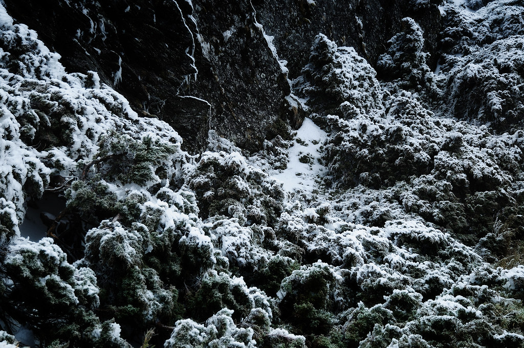 雪景隨手拍