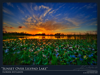 Sunset Over Lilypad Lake at Florida Wetlands