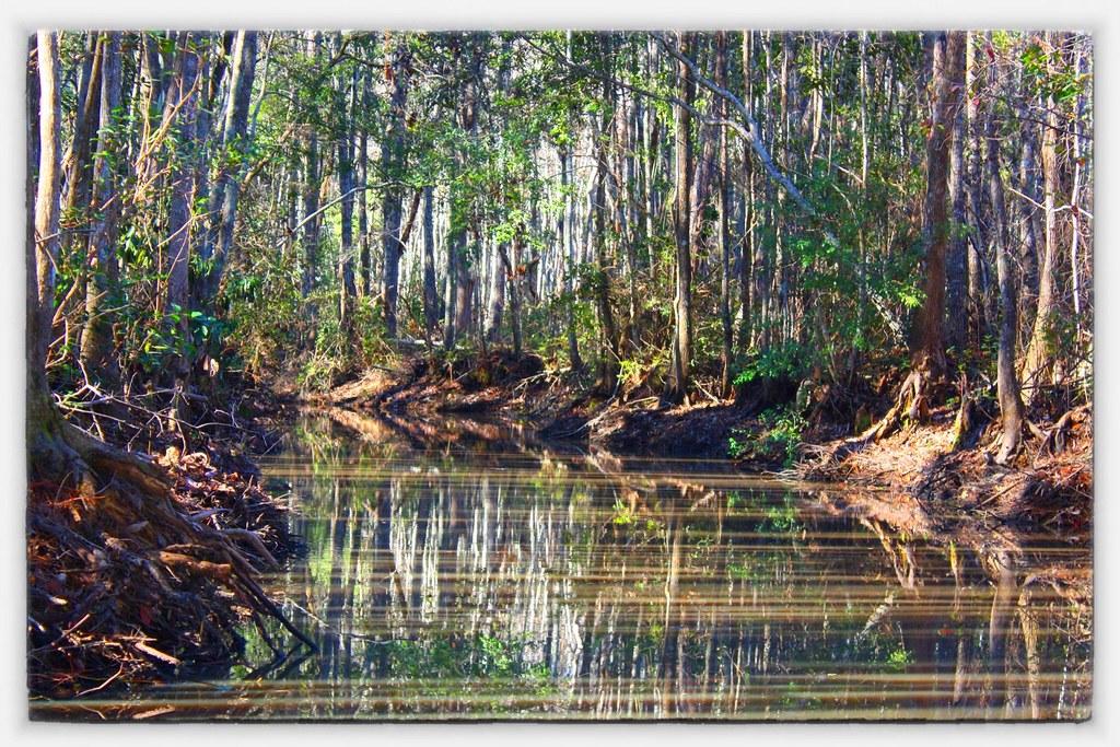 Okefenokee Swamp Park Marsh & Moss: O...