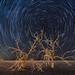 Salton Sea Star Trails by RuggyBearLA