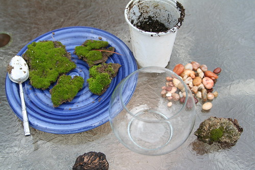 Materials for Moss Terrarium