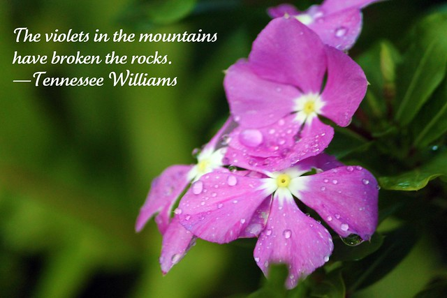 """The violets in the mountains"
